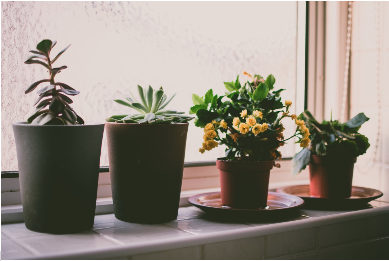 Houseplant Care Guide
