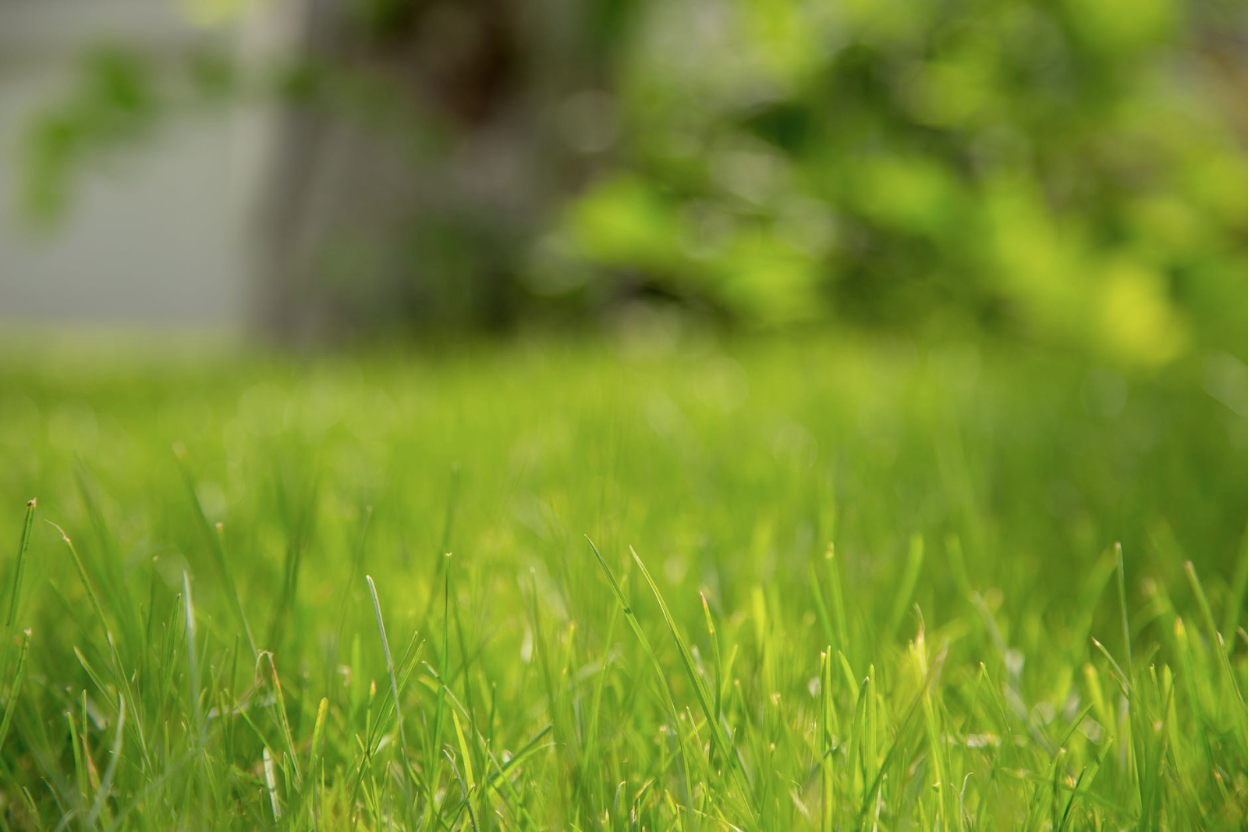 Choosing the Best Grass Type for Your Virginia Home