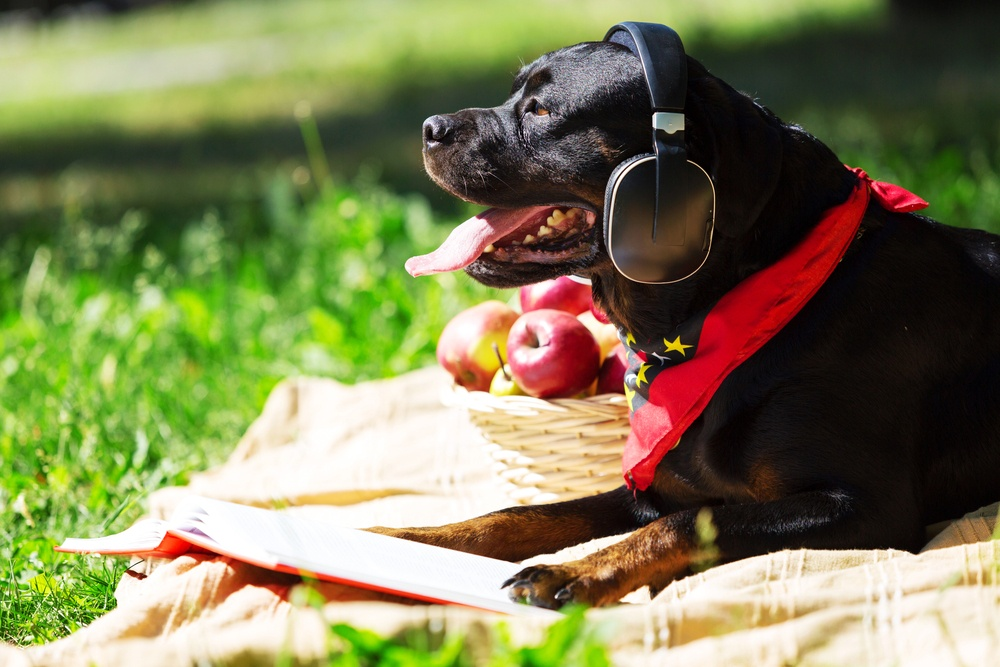 11 Dog-Friendly Spots In The DC Metro Area