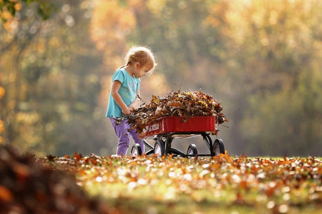 6 Family-Friendly Fall Harvest Activities in Northern Virginia