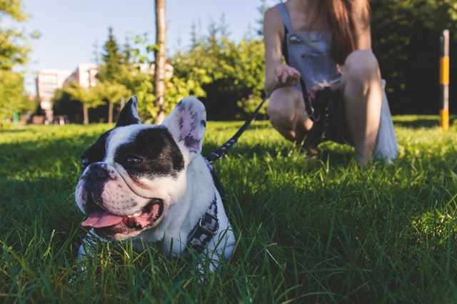 Dog-Friendly Weekend Activities in Loudoun County, VA